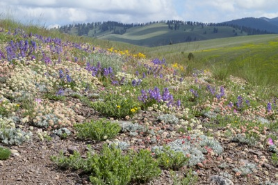 Weekly Photos from Conservation Media: Wildflowers, Hummers, and Butterflies, Oh My