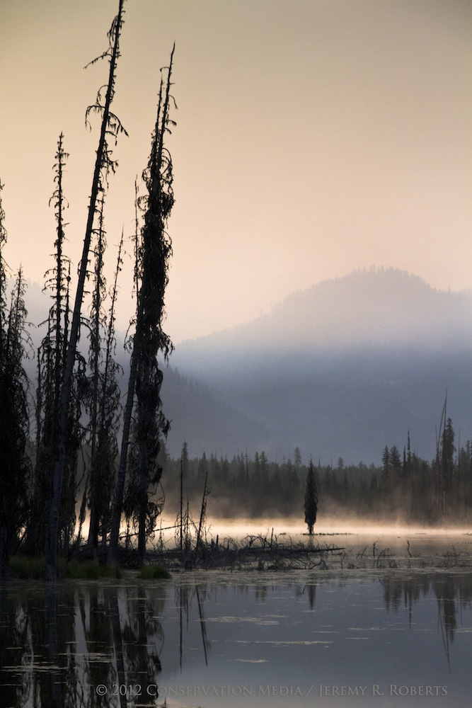 Smoky Landscapes in Fire Season